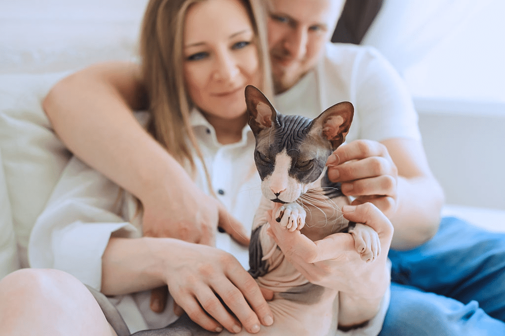 The Sphynx Cat Personality and Behavior Guide 2