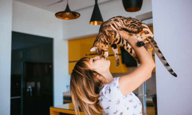 The Bengal Cat Behavior and Personality