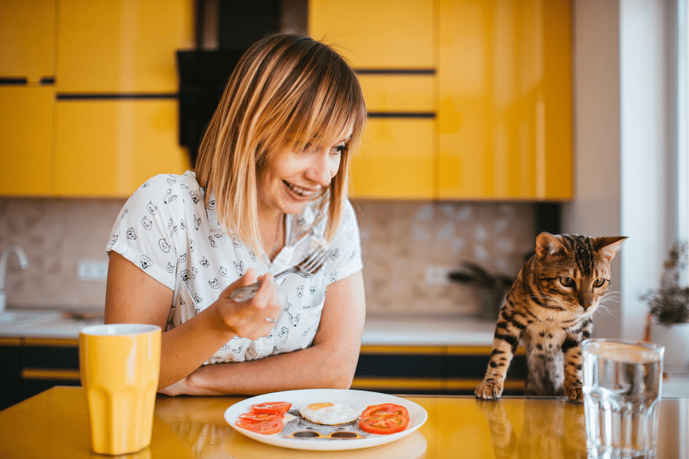 What is the Average Bengal Cat's Lifespan? 3