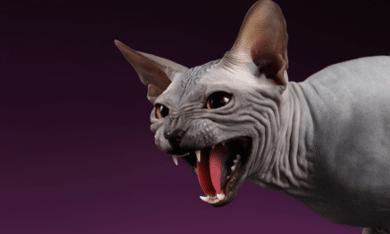 The Sphynx Cat Personality and Behavior Guide