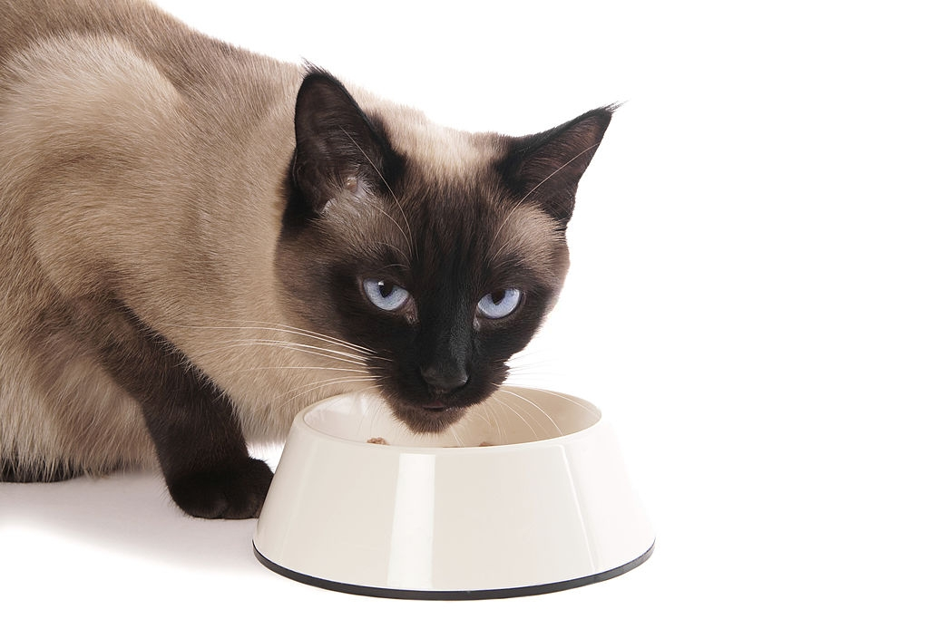 What is the Average Lifespan of a Siamese Cat? 4
