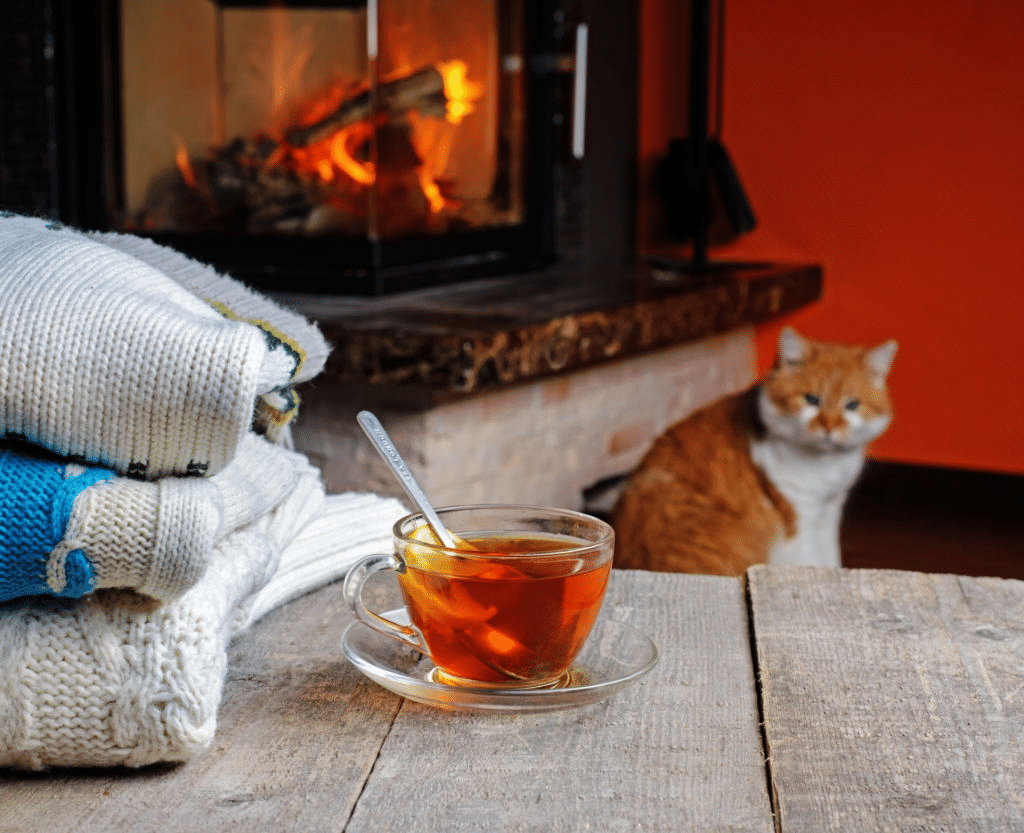 Do cats need more food during winter? 2