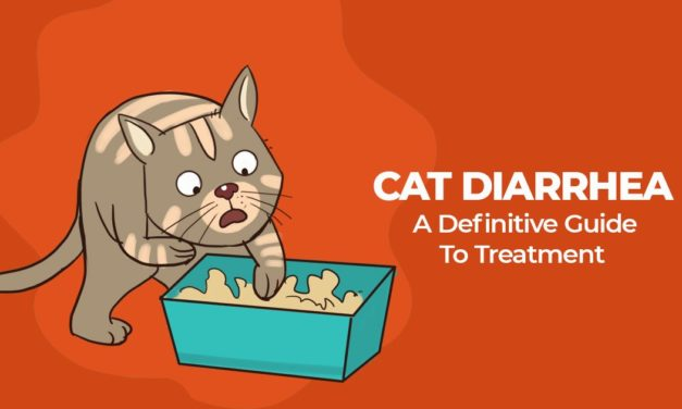 Treating an upset stomach: diarrhea in cats