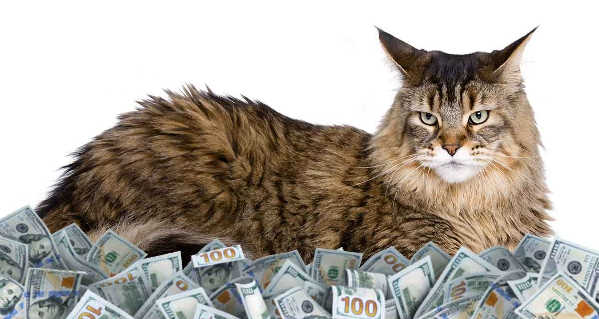 Maine Coon kittens price