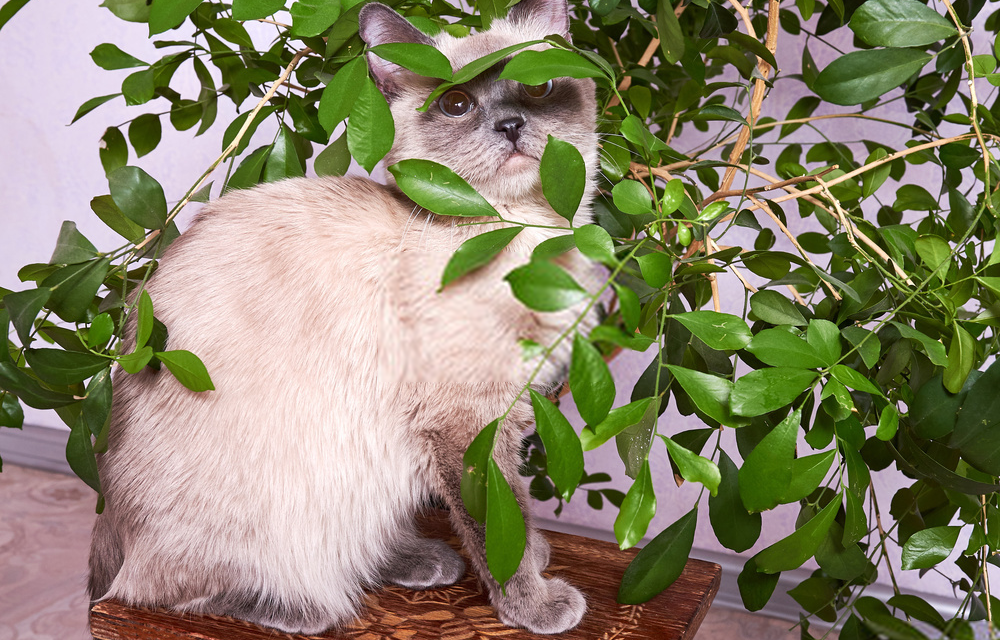 Herbs for treating ailments in senior cats