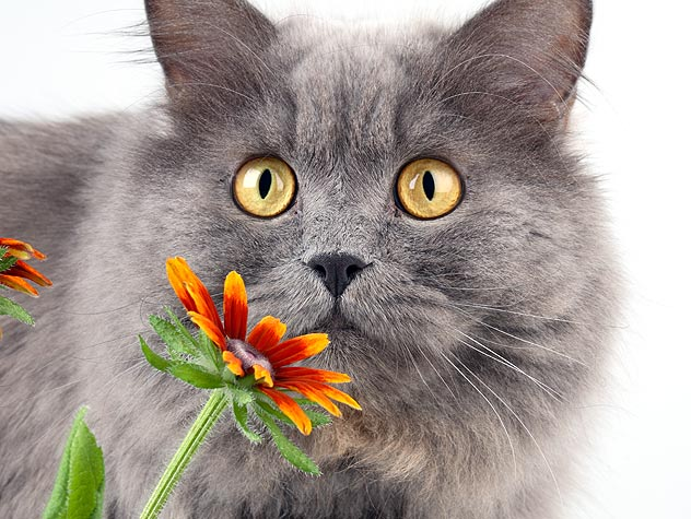 Cat Allergy: Can our cats suffer from allergies too? 3