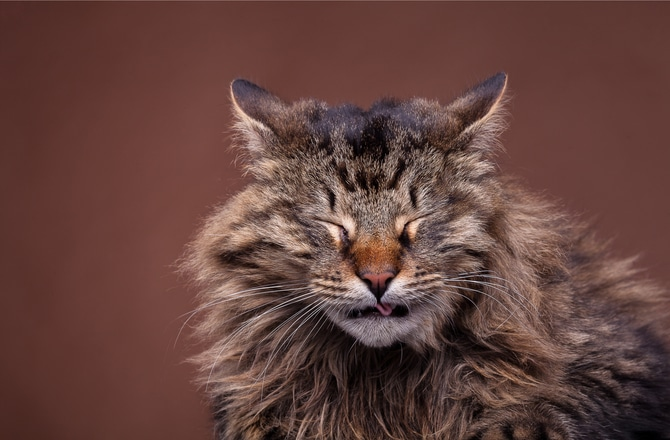Cat Allergy: Can our cats suffer from allergies too? 1