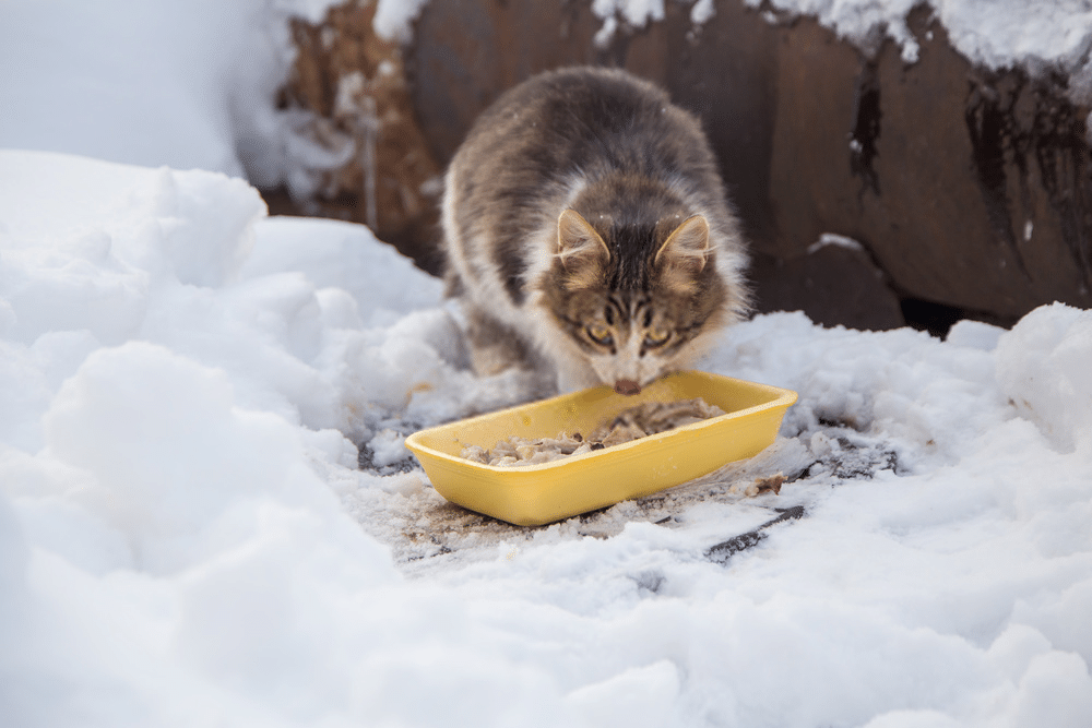 Do cats need more food during winter? 3