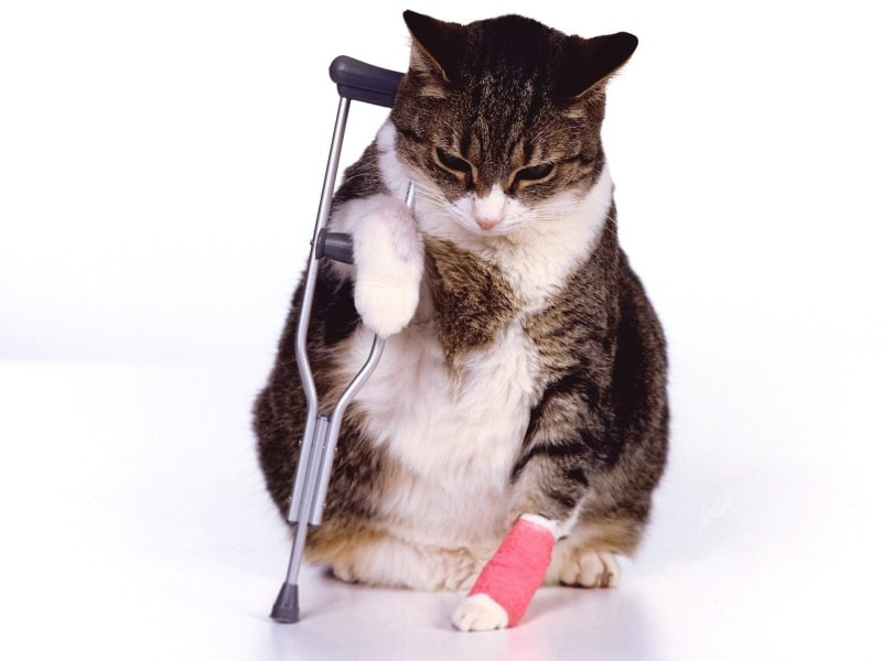 Don't regret not taking out pet insurance in 2020 2