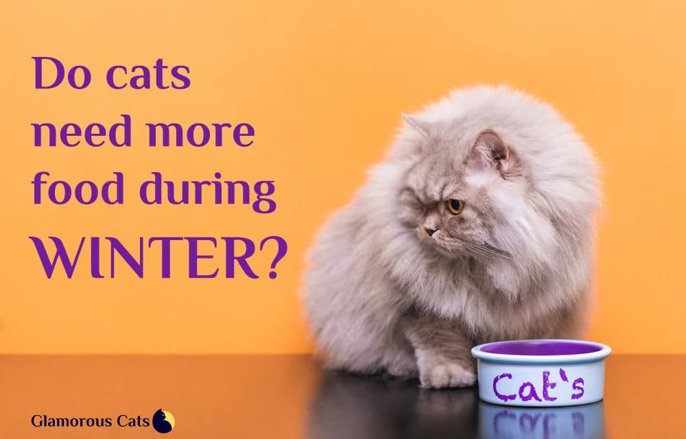 Do cats need more food during winter?