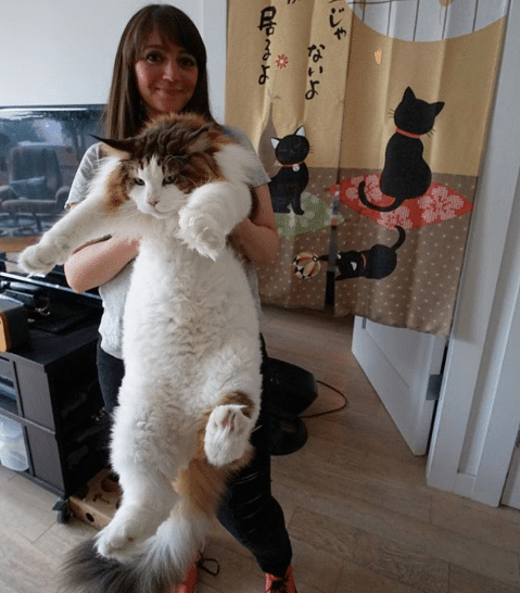 10 Largest and Biggest Maine Coon Cats 2