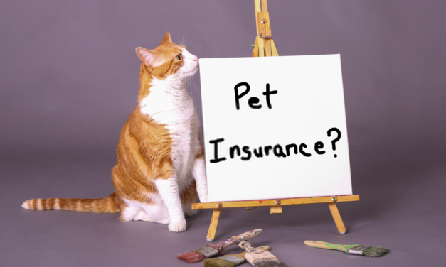 Don't regret not taking out pet insurance in 2020