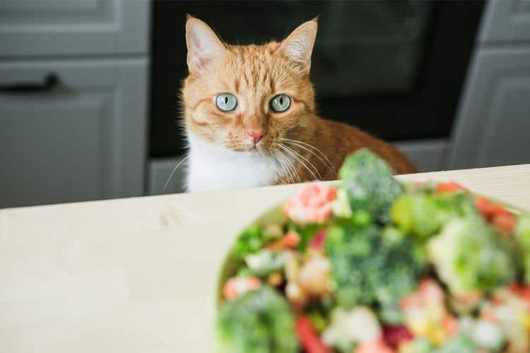 How to Feed Your Overweight Cat: Healthy Diet for a Healthy Cat 2