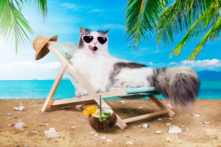 4 Common Summer Ailments in Cats and How to Manage Them