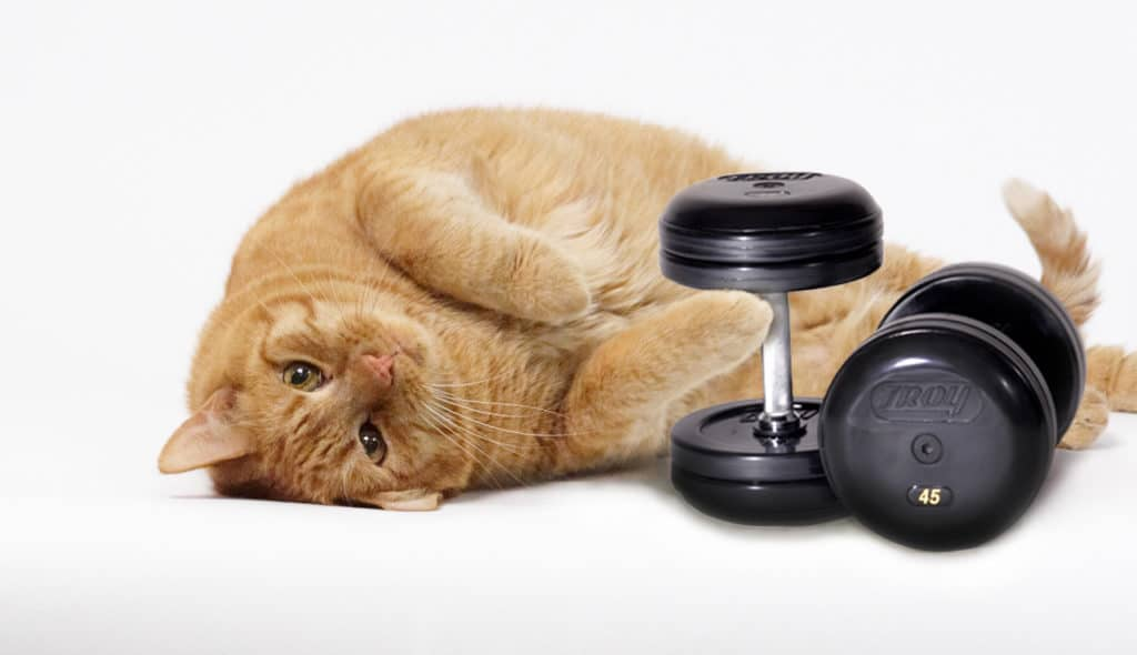 How to Feed Your Overweight Cat: Healthy Diet for a Healthy Cat 4