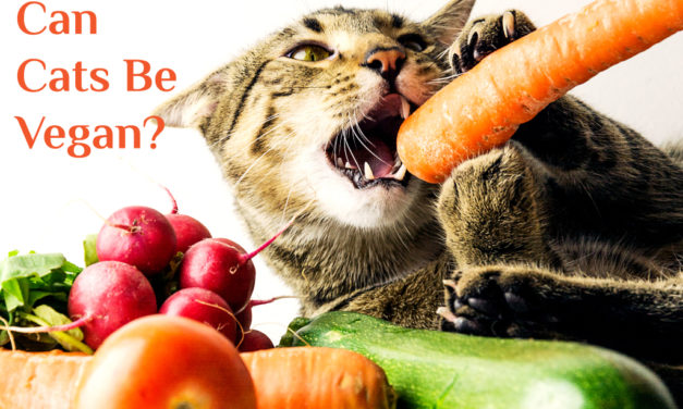 Can Cats be Vegan ? What Should Cats Really Eat ?