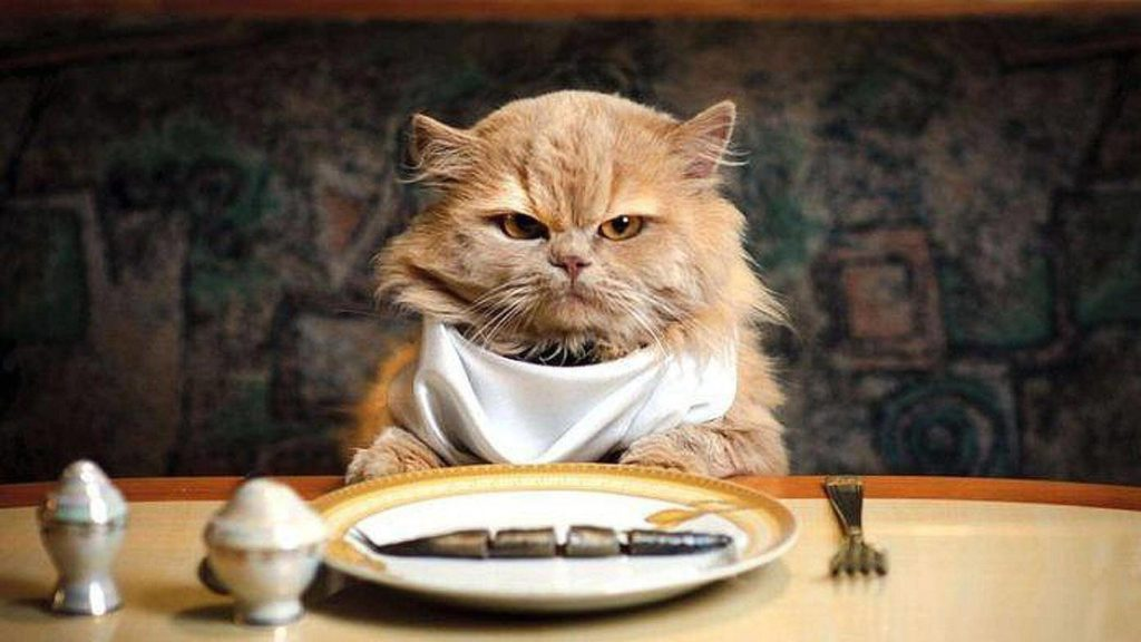 Can Cats be Vegan ? What Should Cats Really Eat ? 1