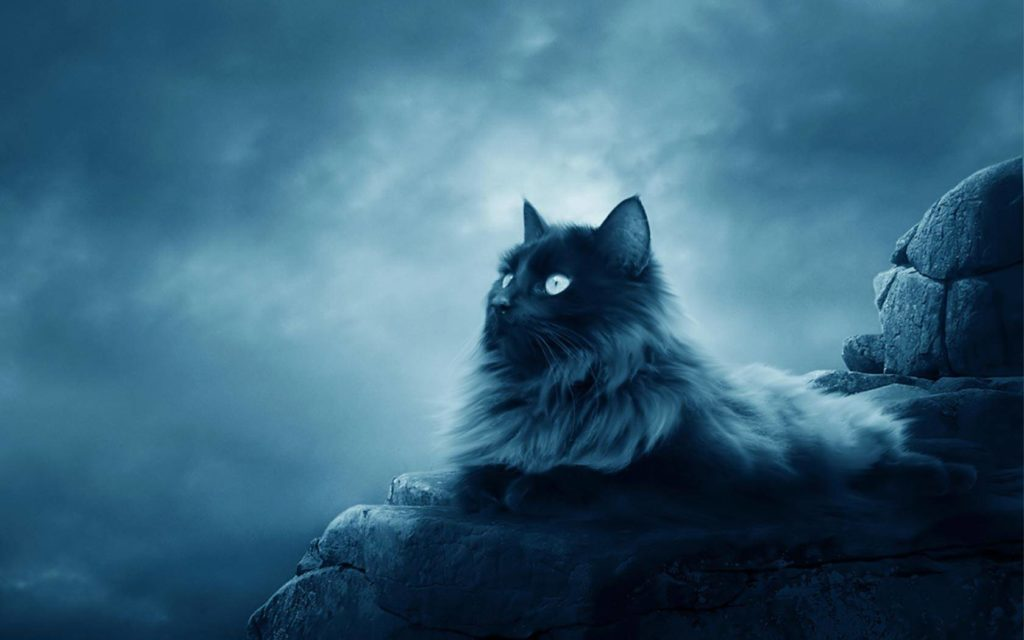 +40 iPhone Maine Coon Wallpapers 1