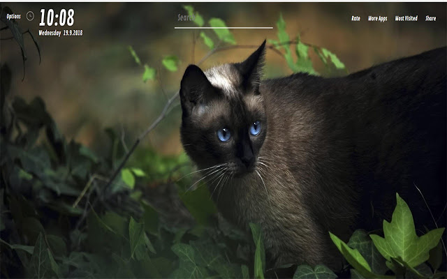 +45 Adorable Siamese Cat Wallpapers 23