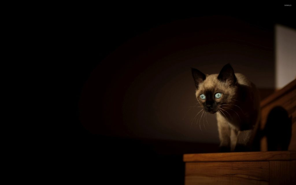+45 Adorable Siamese Cat Wallpapers 27