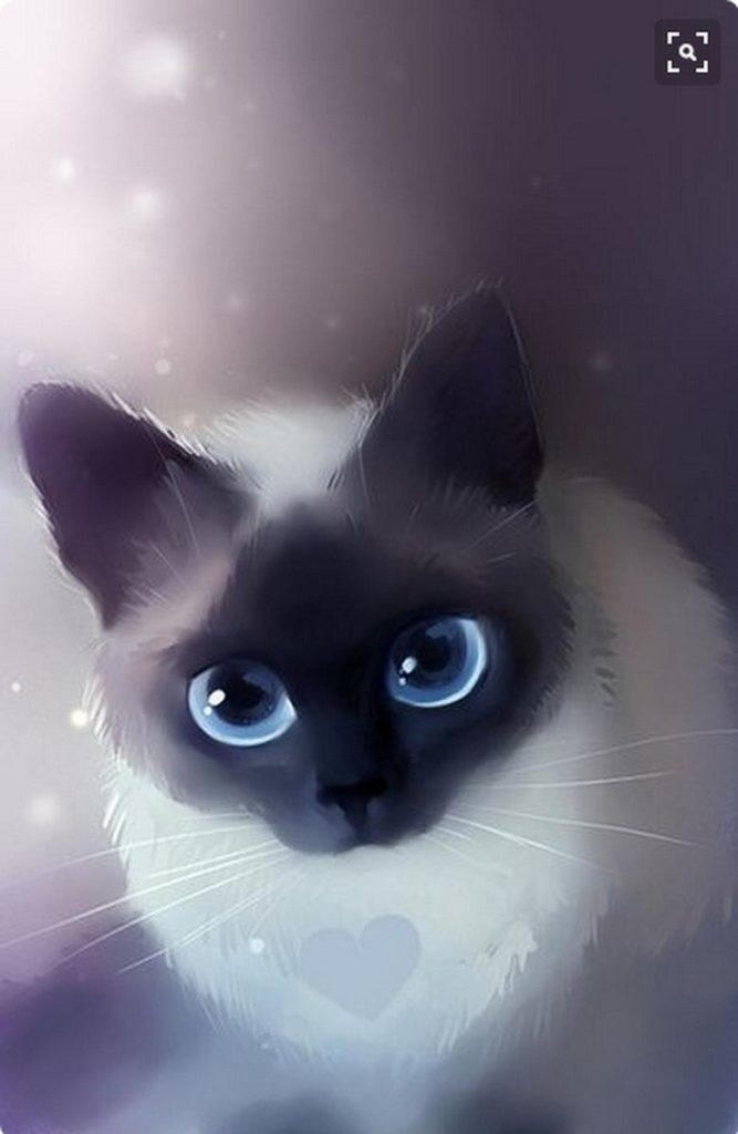 +25 iPhone Siamese Cat Wallpapers 9