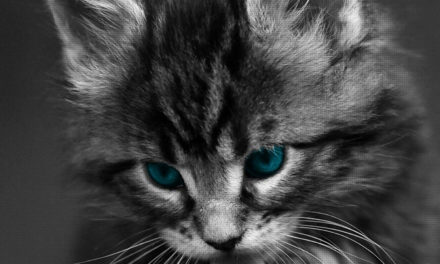 +40 iPhone Maine Coon Wallpapers