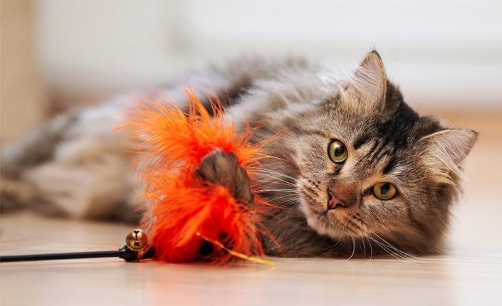 8 Ways To Keep Your Cat Active and Happy In Winter 3