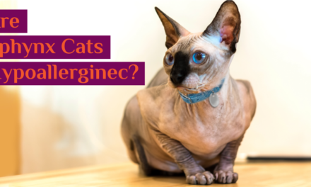 Are Sphynx Cats Hypoallergenic ? 8 Allergy Precautions