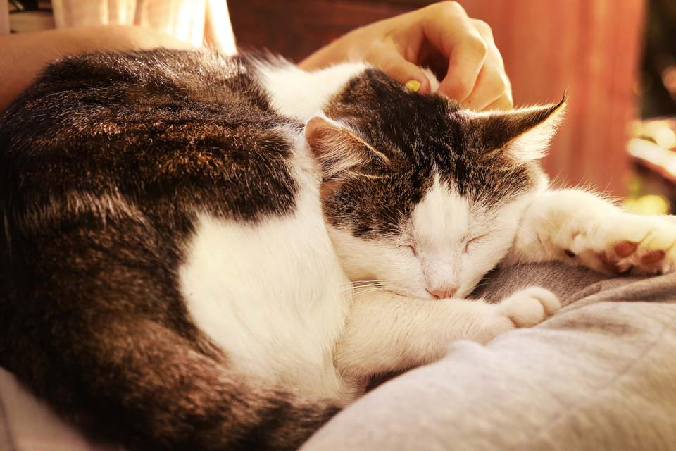 caring for very old cats