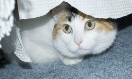 Anxiety in Cats Remedies – Calm Them Naturally