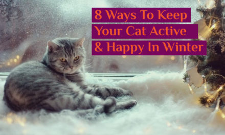 8 Ways To Keep Your Cat Active and Happy In Winter