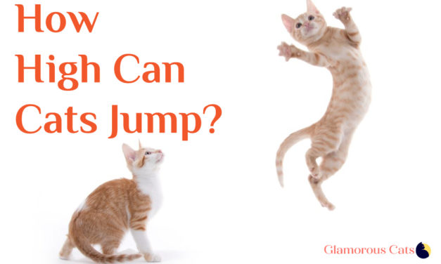 Can Your Cat Jump Over The Refrigerator ? How high can cats jump ?