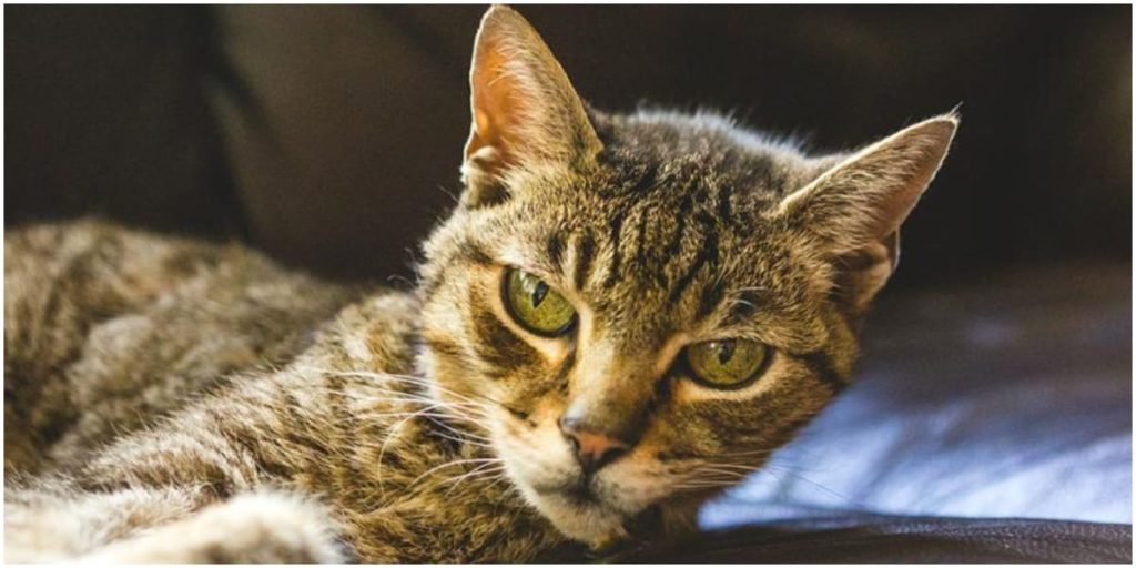 9 Tips for Caring for Very Old Cats 5