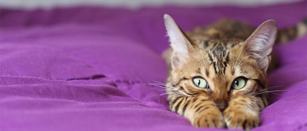 Anxiety in Cats Remedies - Calm Them Naturally 3