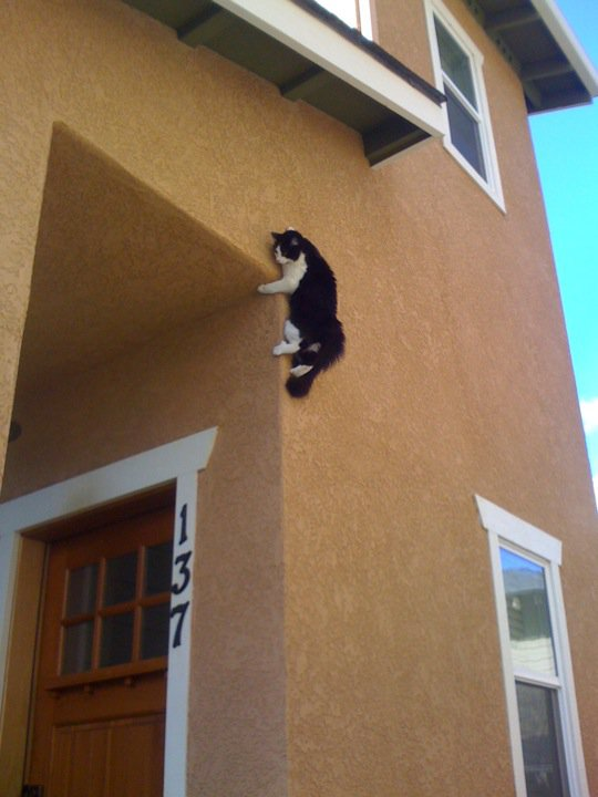 Can Your Cat Jump Over The Refrigerator ? How high can cats jump ? 1