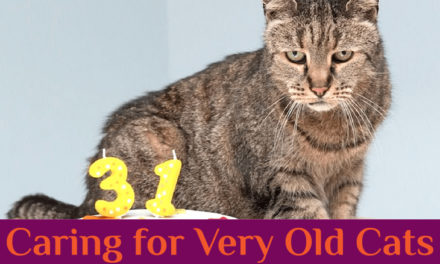 9 Tips for Caring for Very Old Cats