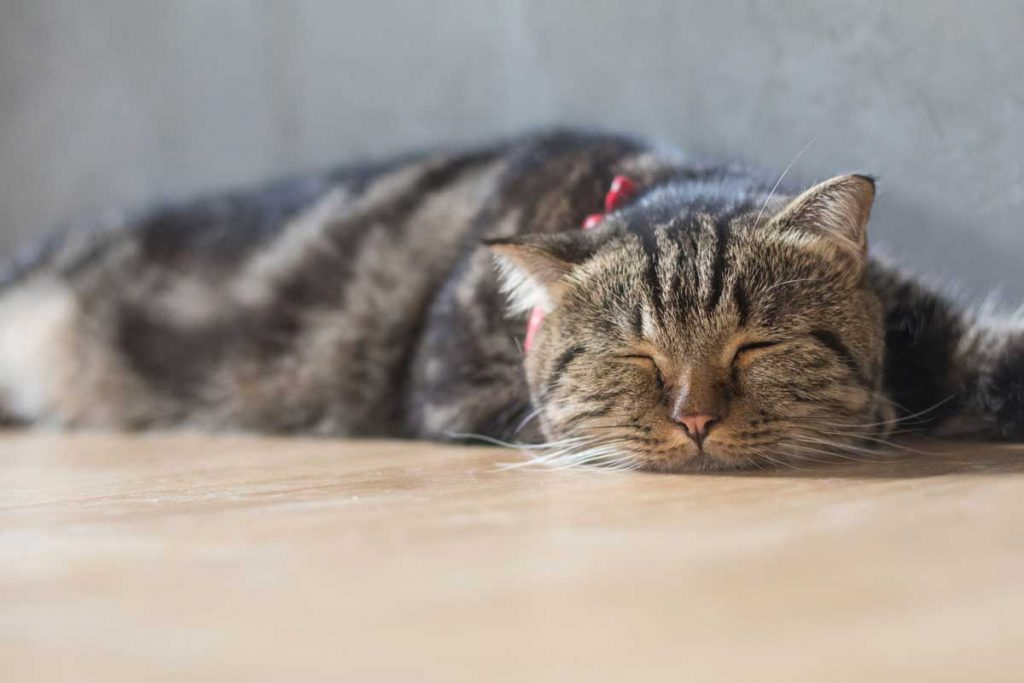 8 Ways To Keep Your Cat Active and Happy In Winter 6