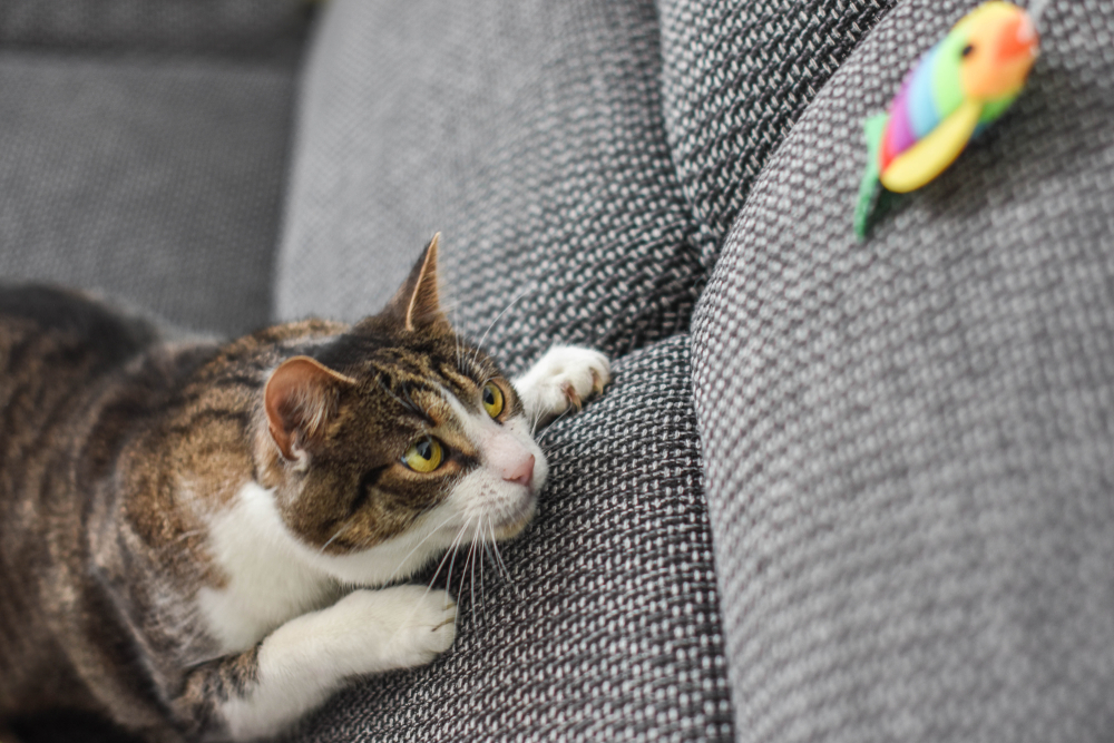 8 Ways To Keep Your Cat Active and Happy In Winter 4