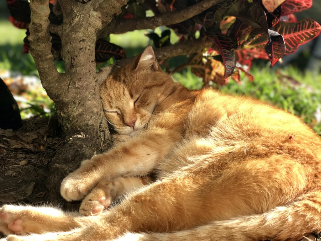 8 Ways To Keep Your Cat Active and Happy In Winter 5