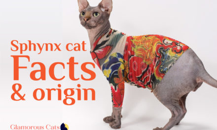 The Ultimate Guide on Sphynx Cat Facts and Origin 101
