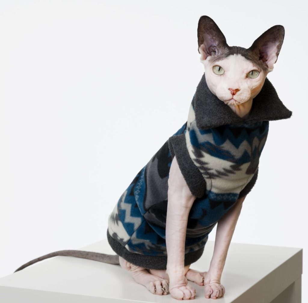 The Ultimate Guide on Sphynx Cat Facts and Origin 101 7