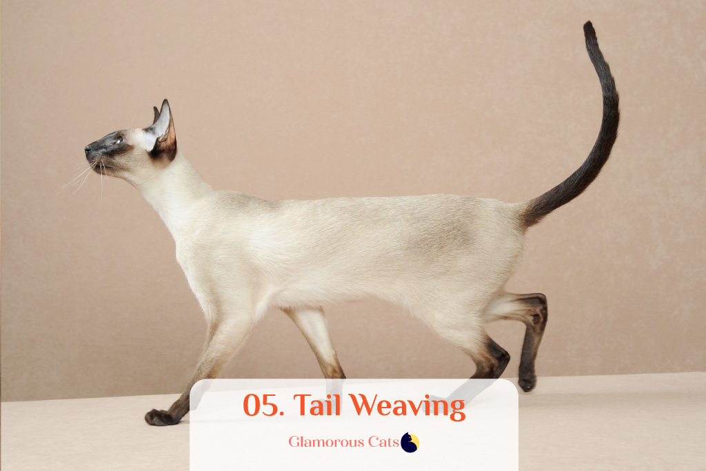 What Makes Siamese Cats So Affectionate? Can they be mean? 6
