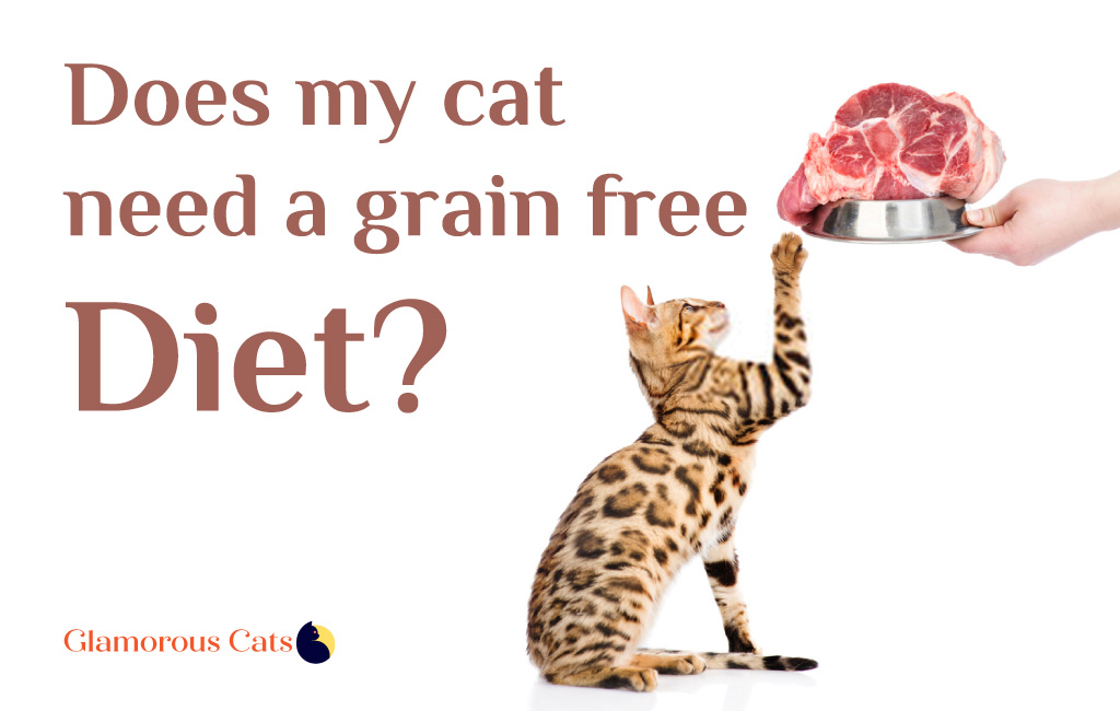 Does my cat need a grain free diet?