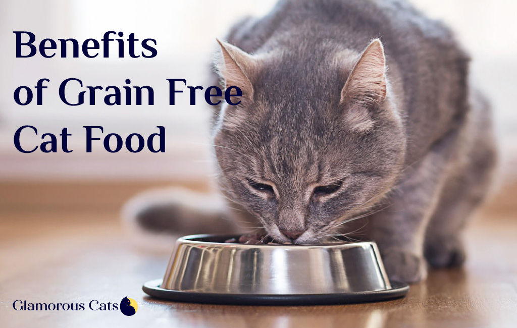 what are the benefits of grain free cat food?