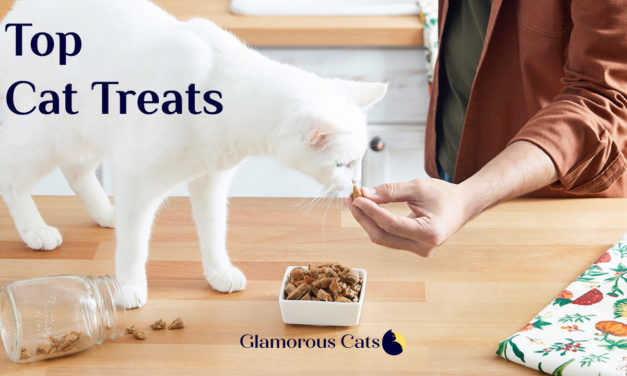 Best 20 Cat Treats for 2020 (Review)