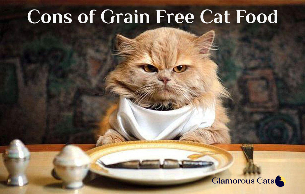 what are the cons of grain free cat food