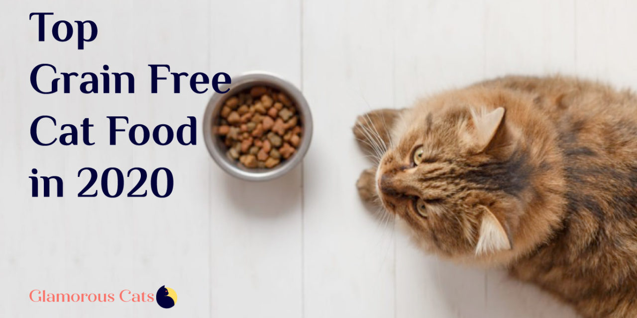 The 20 Best grain free cat food in 2020 (Review)