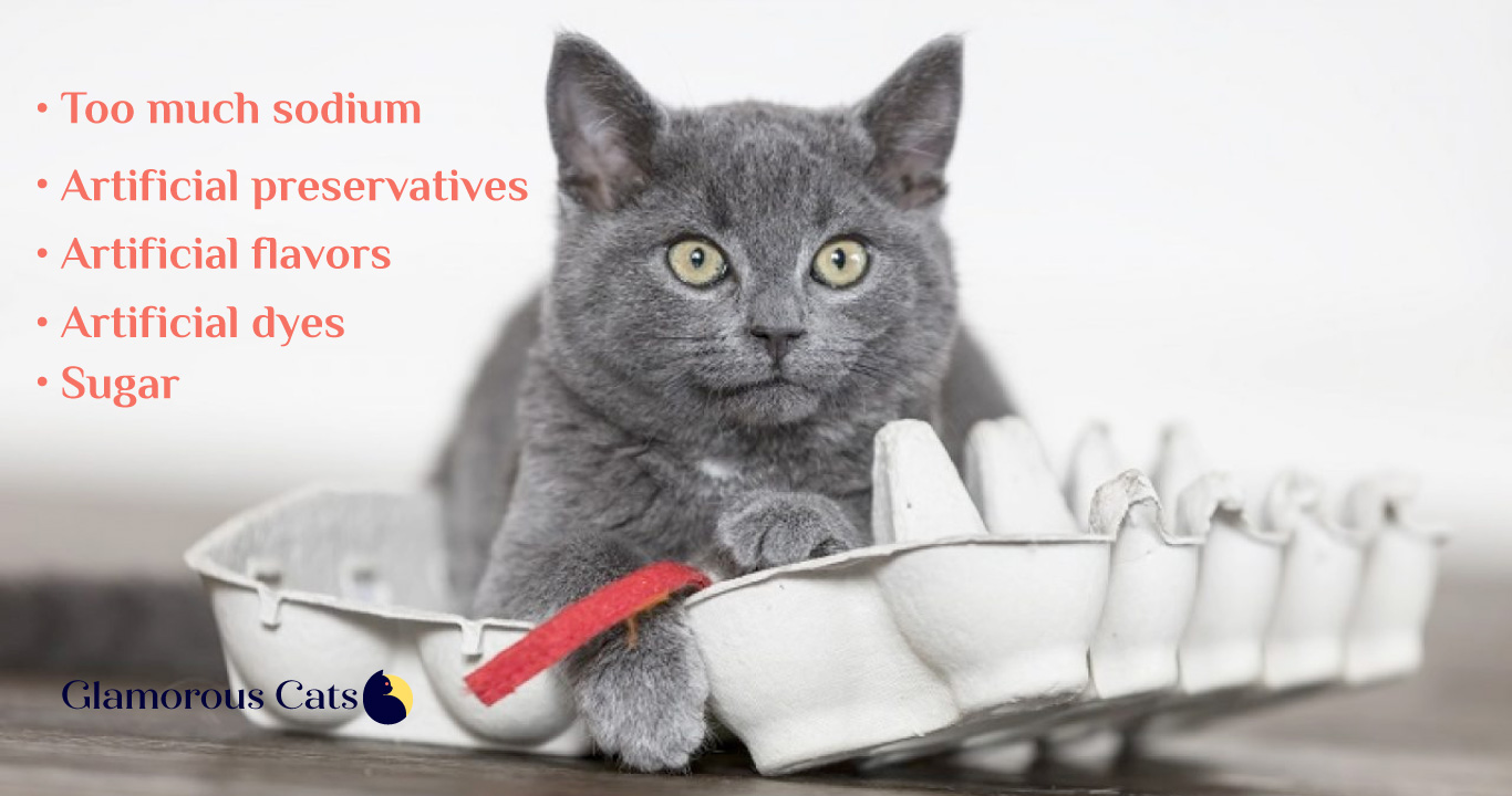 what ingredients to avoid in cat treats
