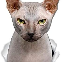 Winston & Bear Grumpy Sphynx Cat Wall Decals – 2 Pack – Sphynx Cat Toilet Sticker – 3D Cat Car Window and Bumper Sticker – Retail Packaged Sphynx Cat Gifts