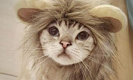 Namsan Pet Costume for Holiday Cat Halloween Hat Dog Christmas Outfit- Pet Sailor Outfit, Lion Hat, Christmas Hat